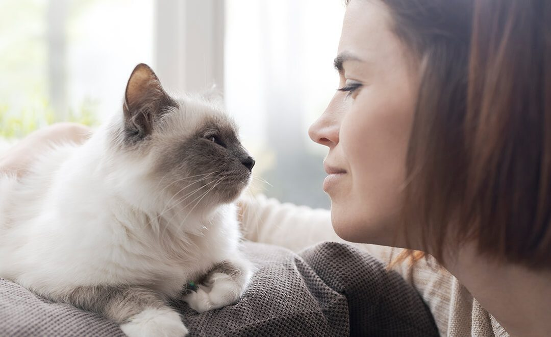 Are you a cat person? Here's how to tell